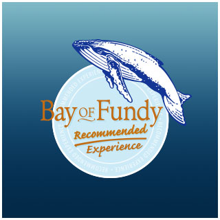 bay of fundy recommended experience 320